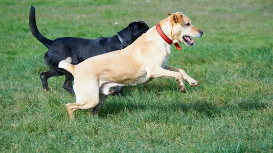 Pay your dog registration online