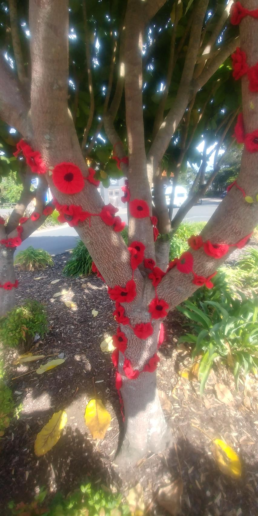 Raglan Poppy Tree 2018 - image supplied by Rodger Gallagher