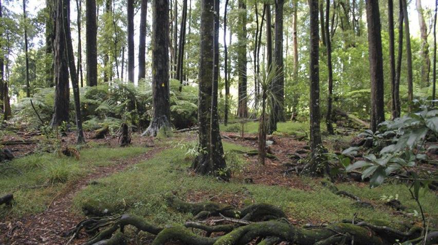 Wright's Bush, Waikato District