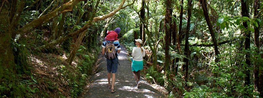 Bridal Veil Falls scenic walk is located near Raglan in the Waikato