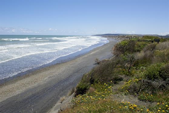 Port Waikato coastal reserve