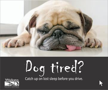 Road Safety Campaign - Dog tired