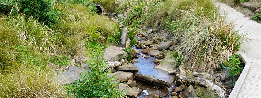 An example of stream daylighting. Image supplied/Boffa Miskell.